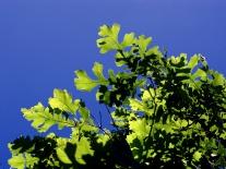 0-005-Q_macro-Foliage2_SX_zps94d87355