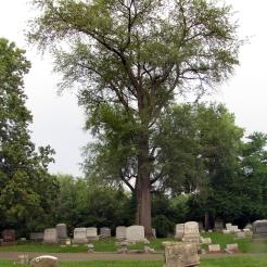 0-015_Prunus_serotina-Tree_SX_zps6bf37d8f