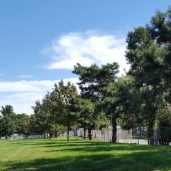 #0-055--Pinus_rigida-5_GP