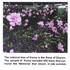 #0-056-KoreaMemorial-Hibiscus_CarlGreenwoodBrochure