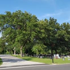 #0-057-Quercus_ imbricaria-39-821148,89-659303_GP